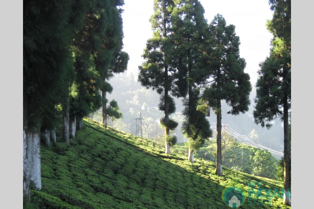 6 in a Bed & Breakfast in Darjeeling, West Bengal