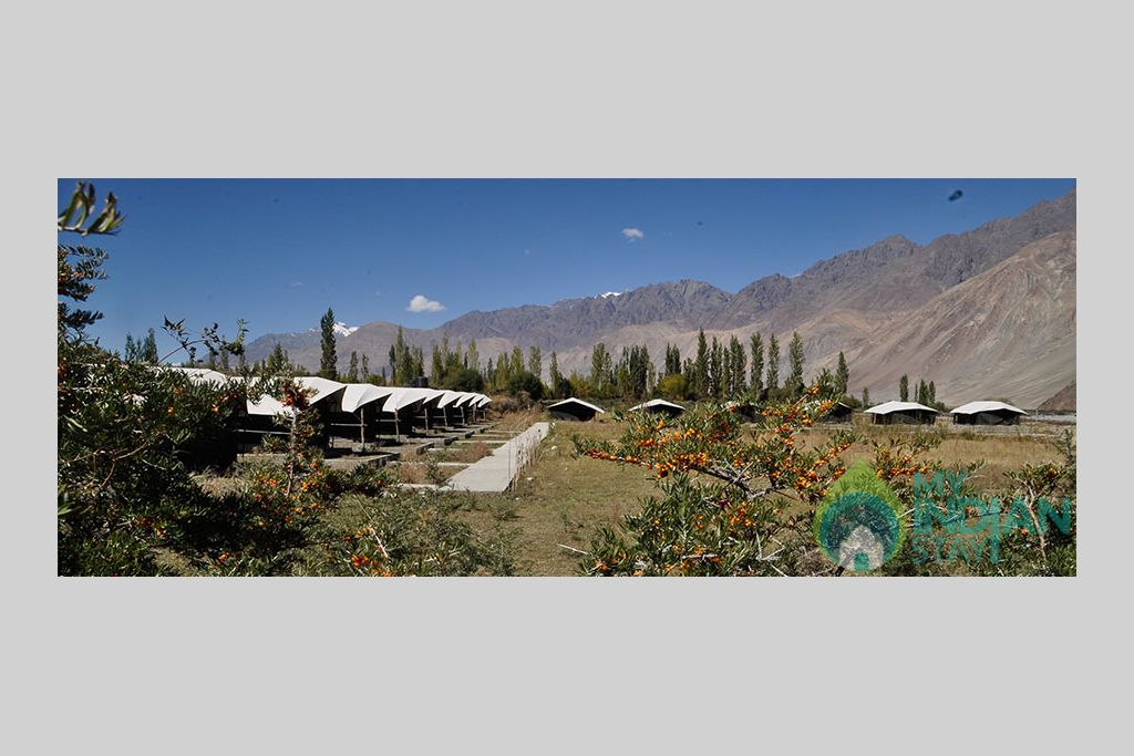 header4 in a Tents in Leh, Jammu and Kashmir