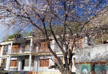Comfortable stay in Leh