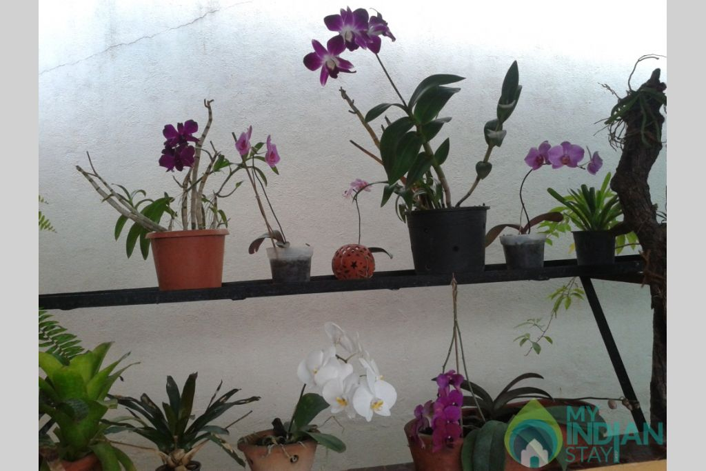 Orchid-collection in a Guest House in Panjim, Goa