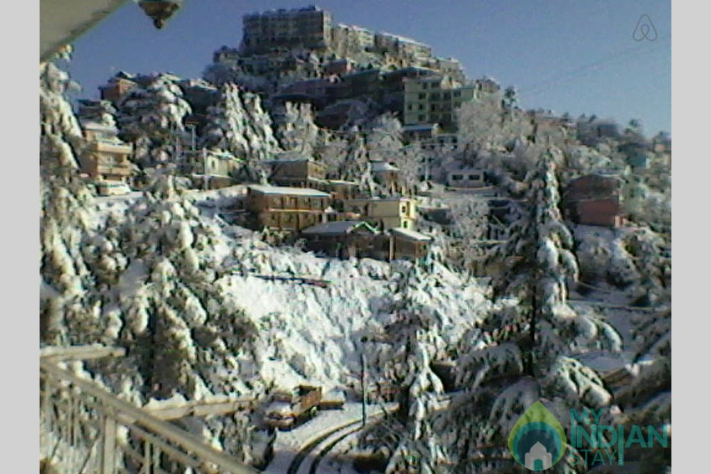 Snow covered trees in a Bed & Breakfast in Shimla, Himachal Pradesh