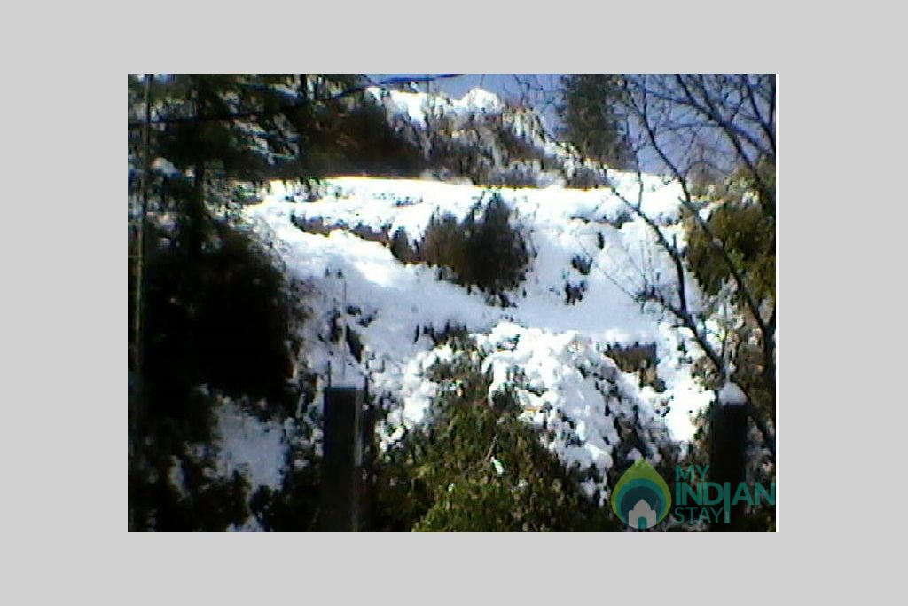 Snow in shimla in a Bed & Breakfast in Shimla, Himachal Pradesh