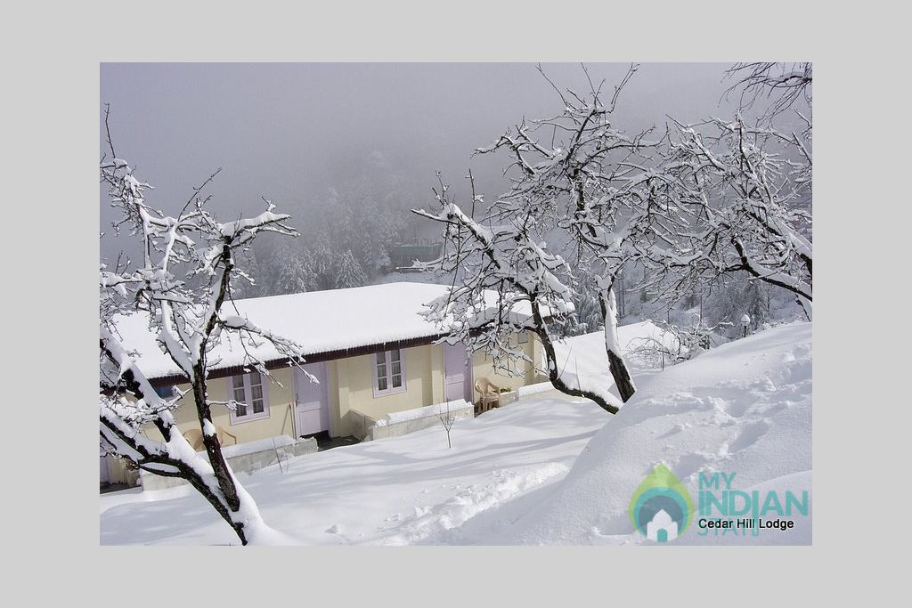 Snowfall at Cedar Hill in a Bed & Breakfast in Kufri, Himachal Pradesh