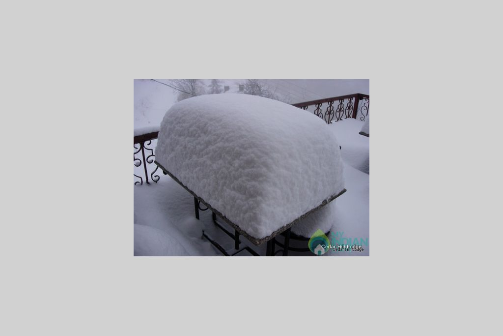 Snowfall in Cedar Hill (Jan-Mid March) in a Bed & Breakfast in Kufri, Himachal Pradesh