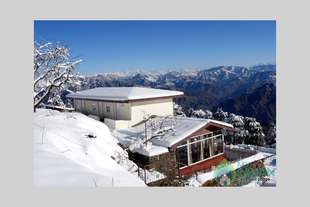 Cedar Hill Winters (Dec-Mid-March) in a Bed & Breakfast in Shimla, Himachal Pradesh