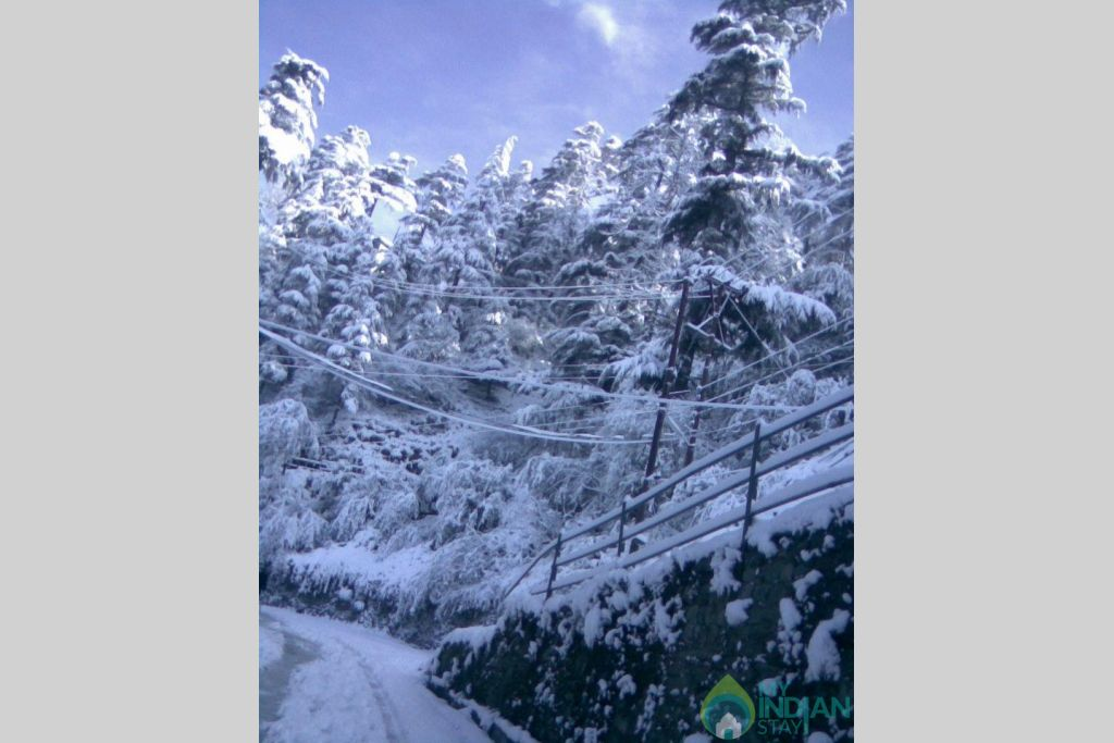 Snow in shimla in a HomeStay in Kufri, Himachal Pradesh
