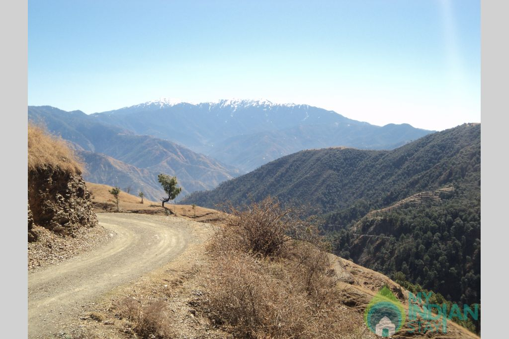 ADVENTURE  ALL AROUND in a HomeStay in Shimla, Himachal Pradesh