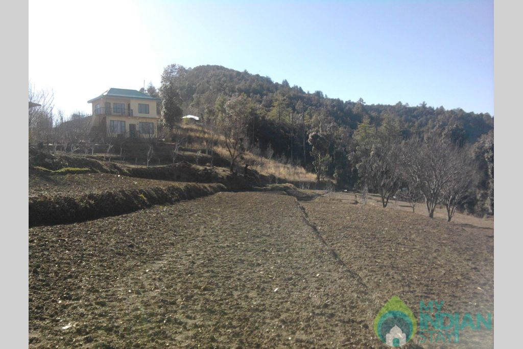 CLOSE TO NATURE in a HomeStay in Shimla, Himachal Pradesh