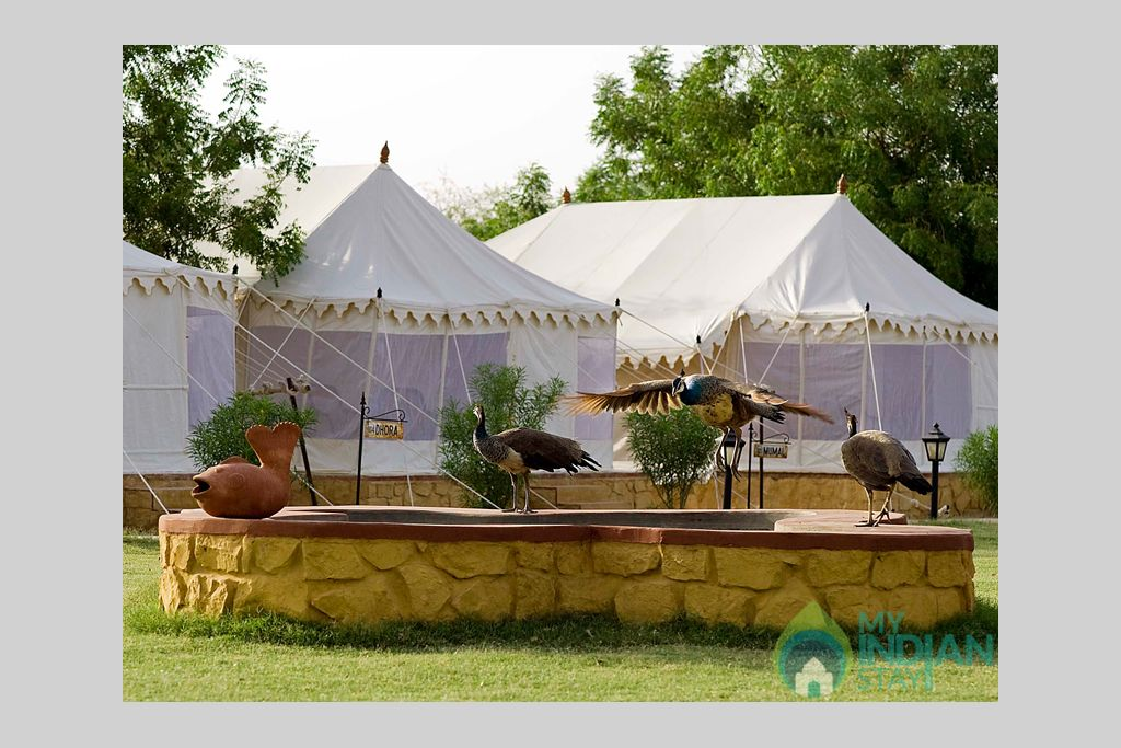 7-Nature-Resort-Camp in a Cottage/Huts in Jaisalmer, Rajasthan