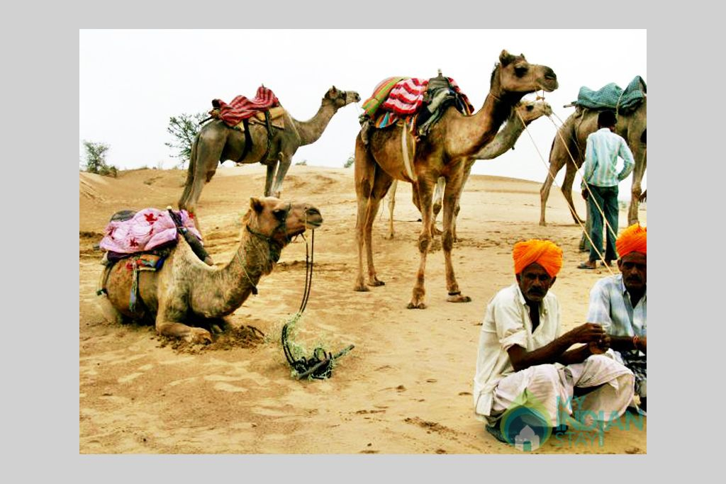 x-Camel-Ride-at-Dunes in a Tents in Jaisalmer, Rajasthan