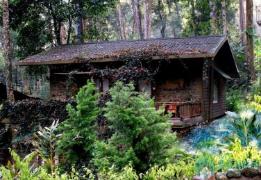 Stay Amid Cardamon Planation In Munnar, Kerala
